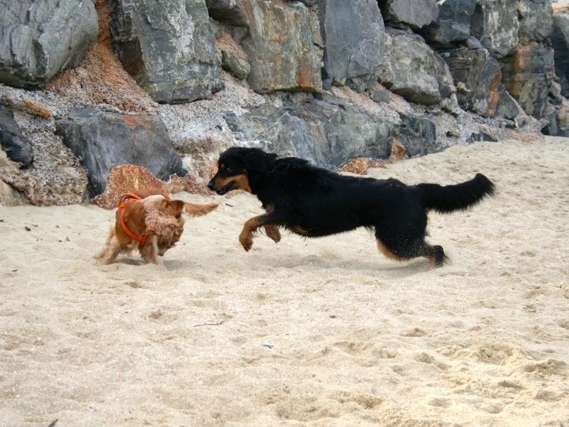 Nala im Strandspiel
