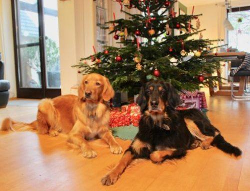 Wir wünschen frohe Weihnachten und einen guten Rutsch in ein erfreuliches Jahr 2019!